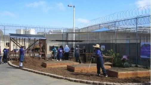 Master Gardeners & the Juvenile Justice System