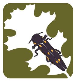 GSOB_Logo